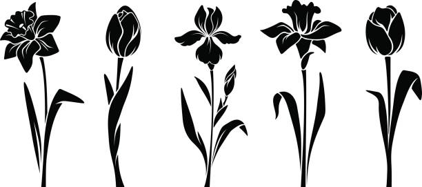 Iris Flower Clipart Black And White.