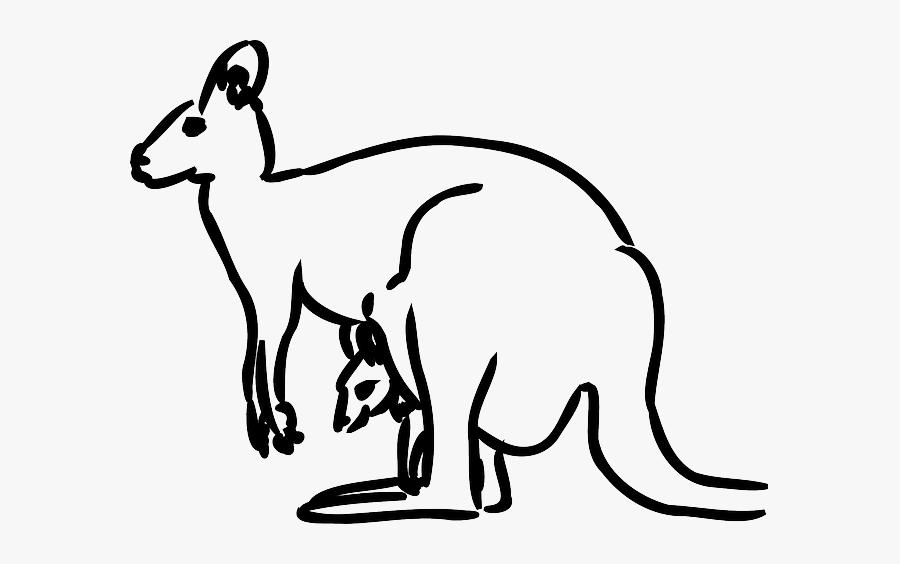 Australia Kangaroo, Baby, Animal, Mammal, Jumping.