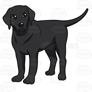 Black White Labrador Clipart.