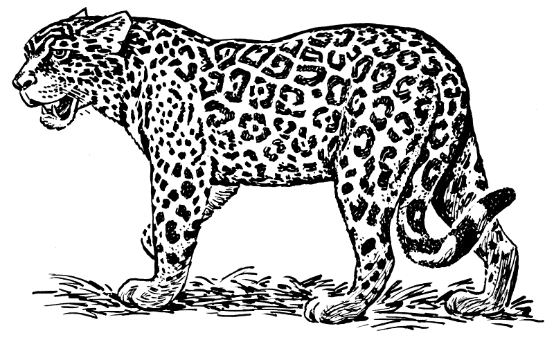 Free Leopard Black And White Clipart, Download Free Clip Art.