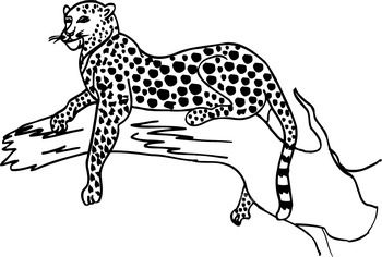Free Black And White Leopard, Download Free Clip Art, Free.