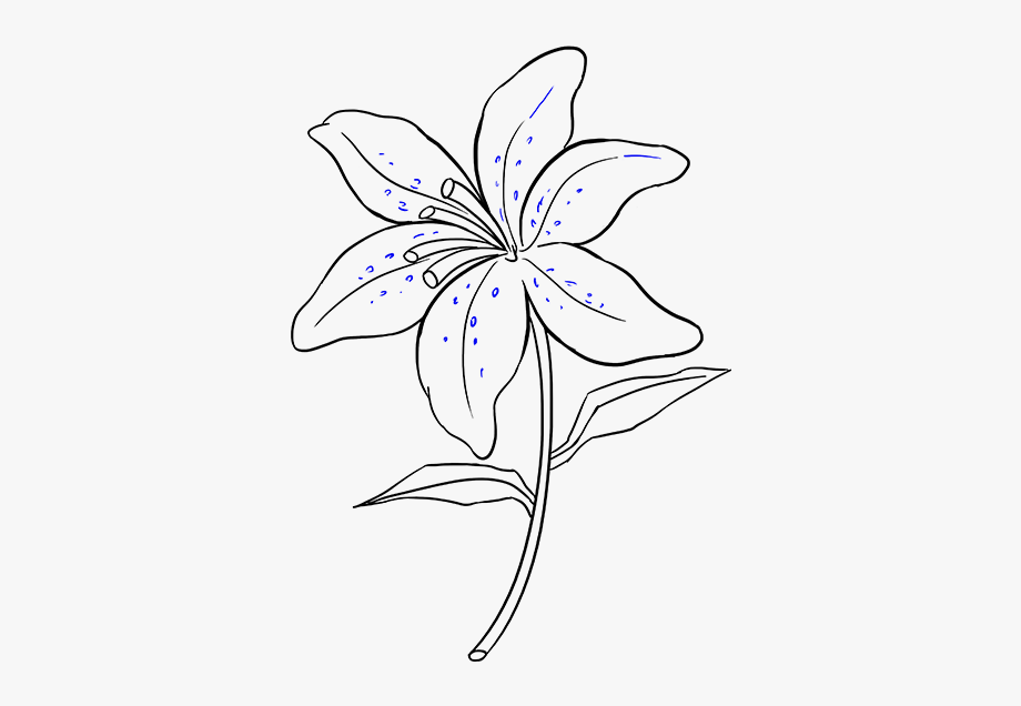 Easter Lily Clip Art Black And White.