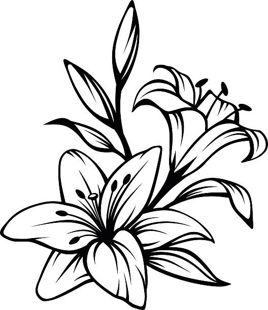 Lily clipart black and white 2 » Clipart Station.