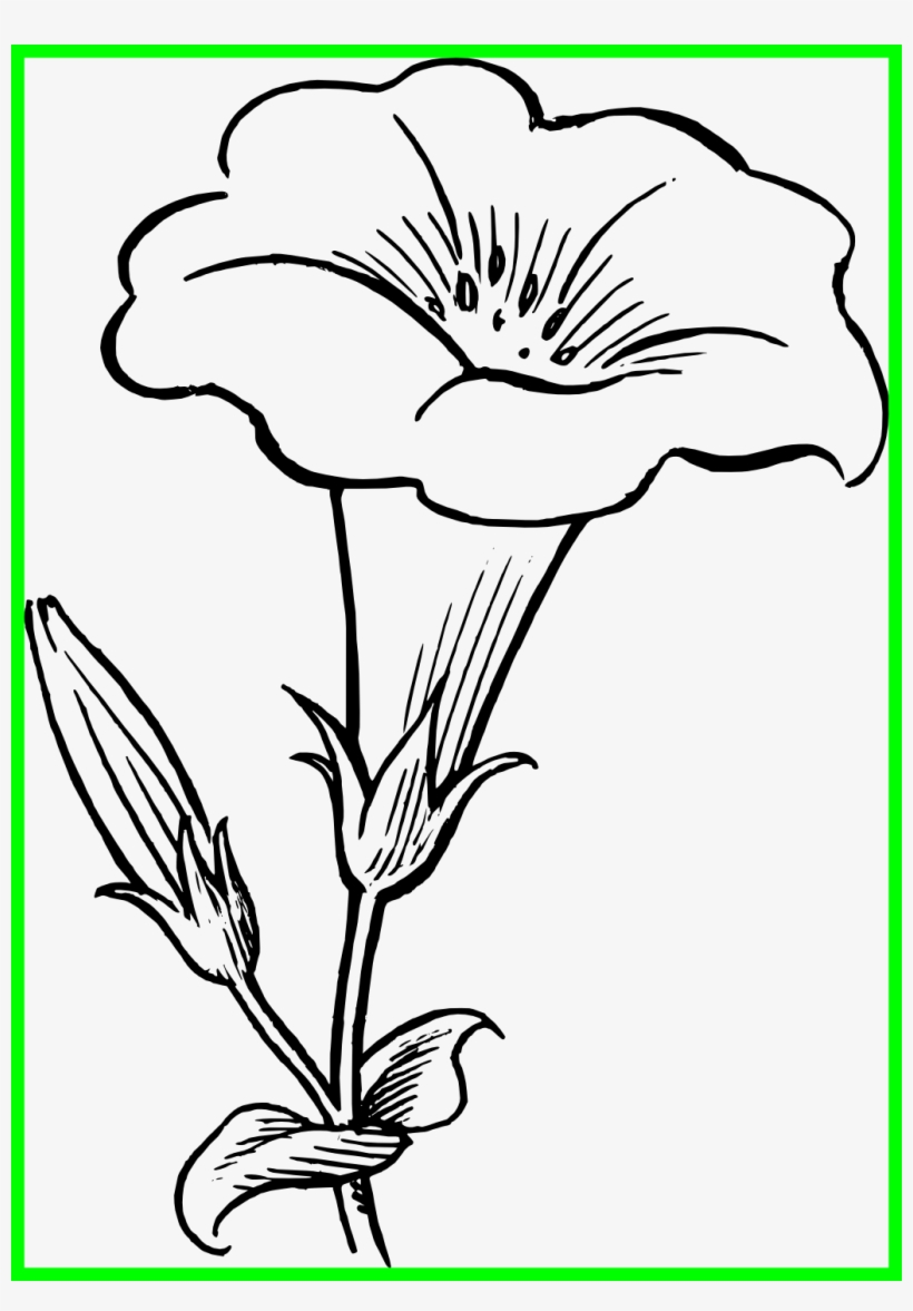 Star Lily Flower Black And White Clipart.