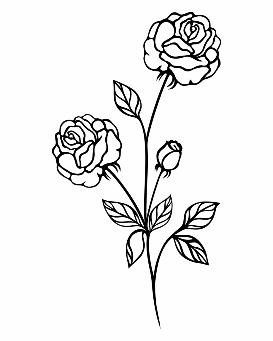 Drawing, Rose, Line Art, Flower, Flora Png Image With.