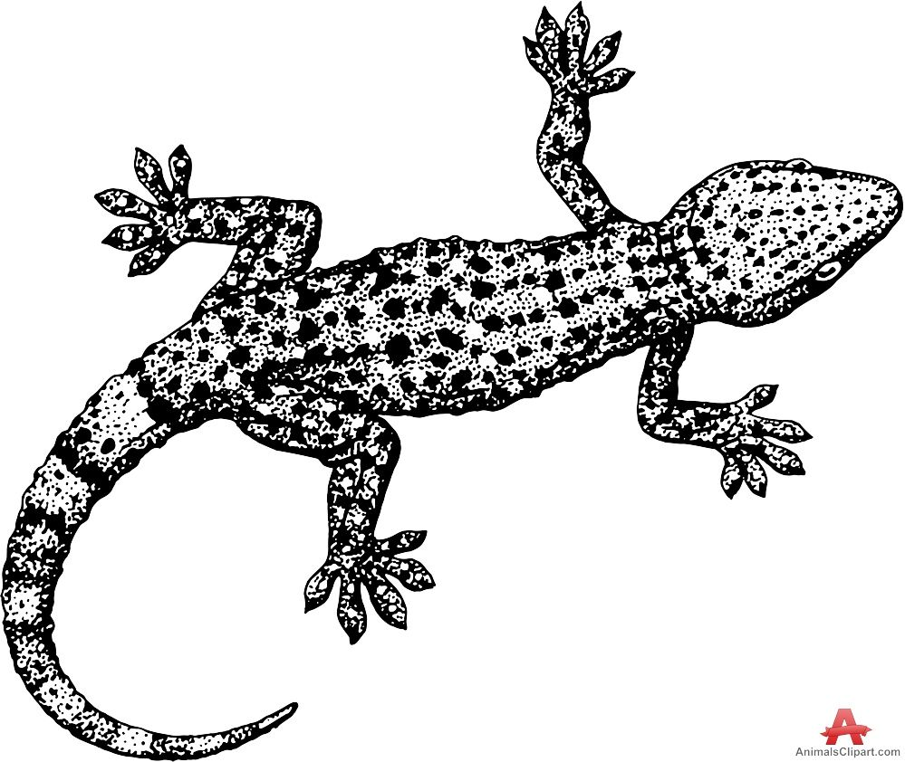 Lizard clipart black and white #15.