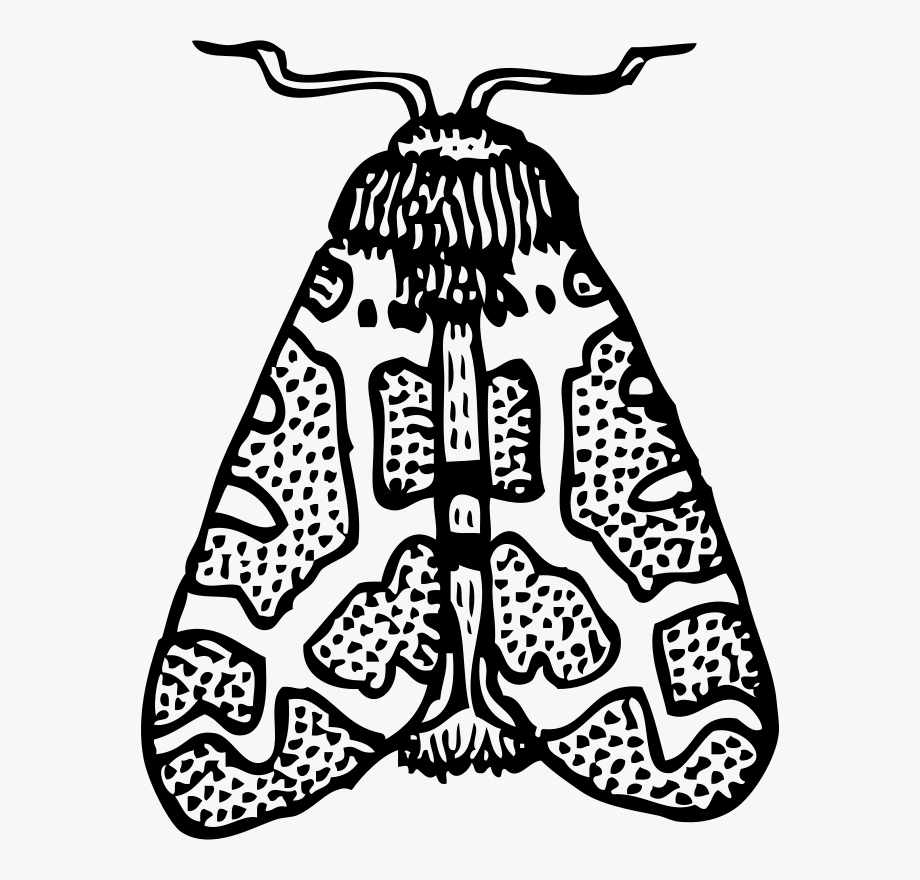 Moth Clipart Black And White , Transparent Cartoon, Free.
