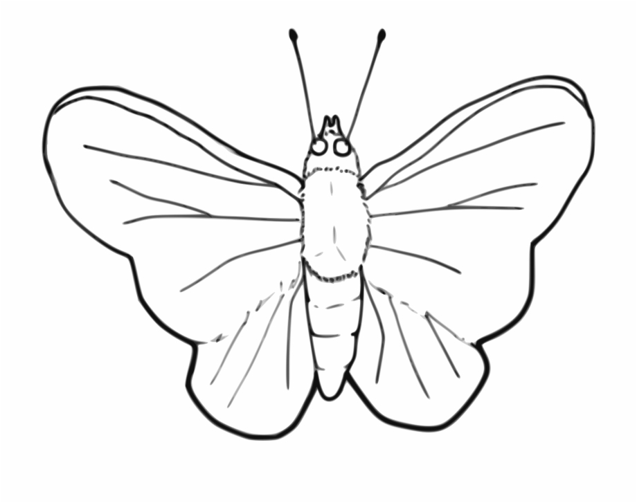 Moth clipart butterflyblack, Moth butterflyblack Transparent.