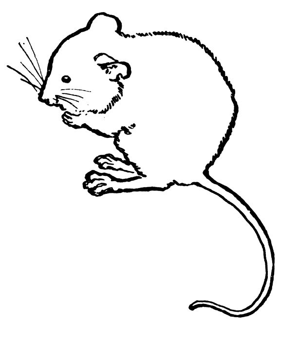 Mouse Black And White Clipart#2212111.