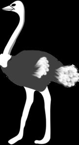 Ostrich Clip Art at Clker.com.