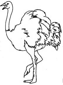black and white clipart ostrich #11