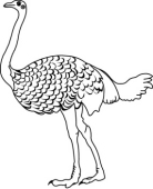 black and white clipart ostrich #12