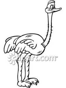 black and white clipart ostrich #18