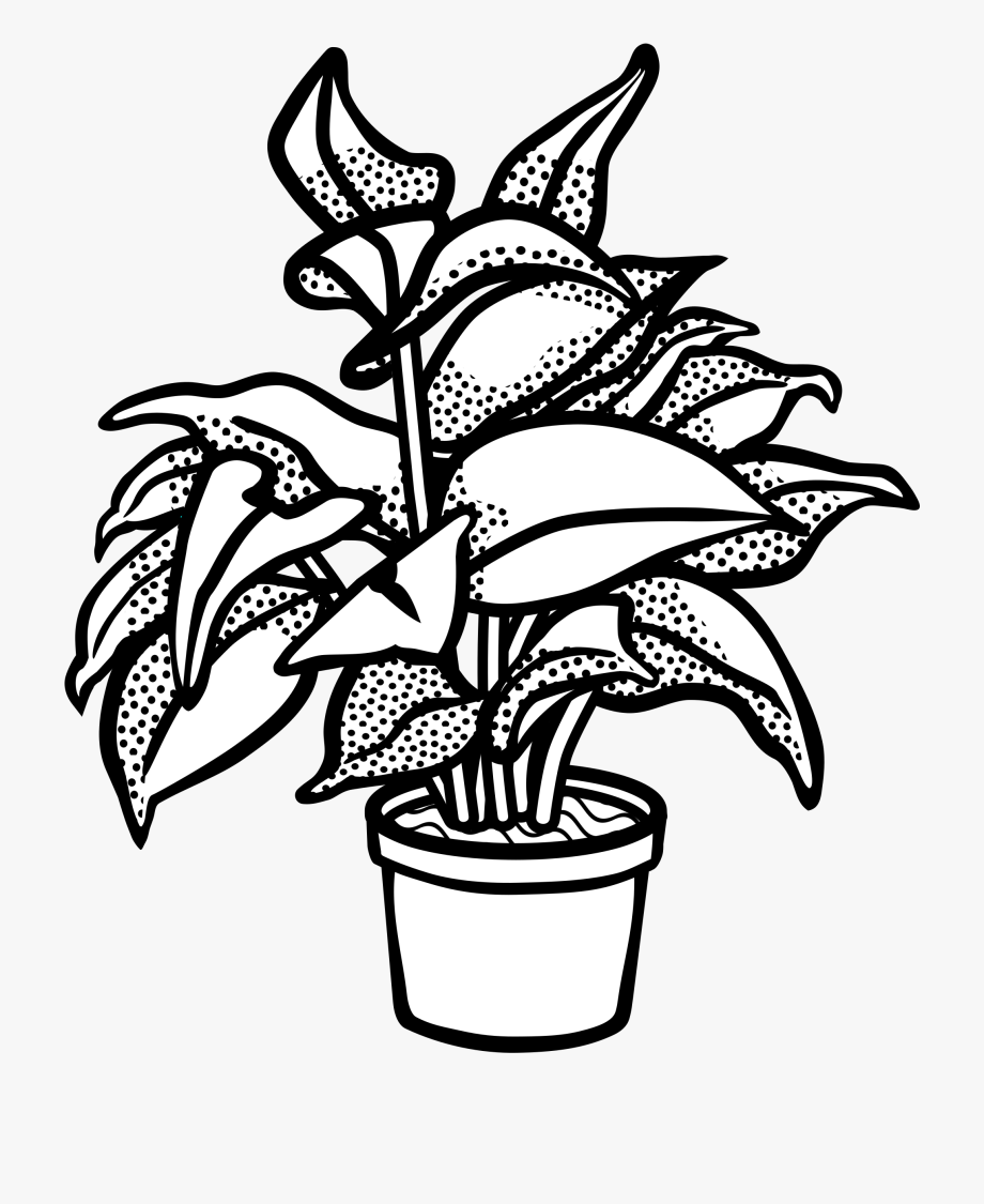 Black White Watering Plant Black.