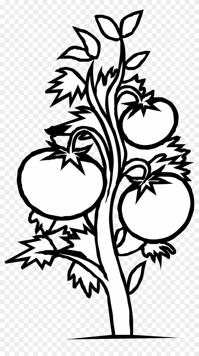 Plant Clip Art Black And White.