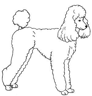 Free Mini Poodle Cliparts, Download Free Clip Art, Free Clip.
