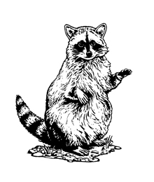 Black And White Clipart Raccoon.