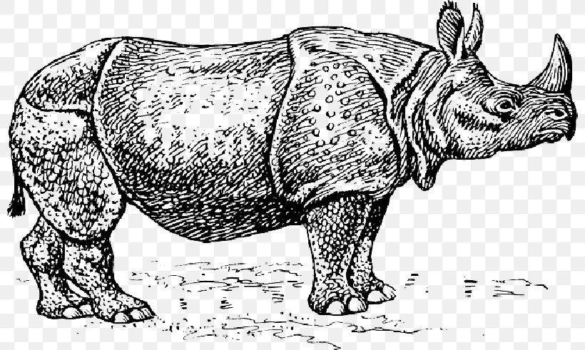 Javan Rhinoceros Clip Art Vector Graphics White Rhinoceros.