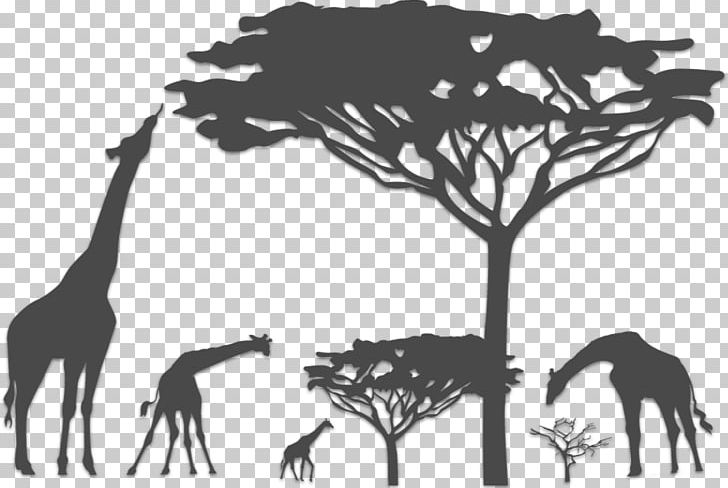 Safari Graphics Kalahari Desert Illustration Giraffe PNG.