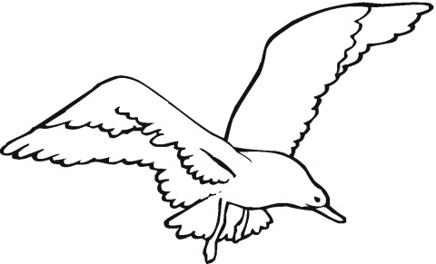 Free Seagull Black And White Clipart, Download Free Clip Art.