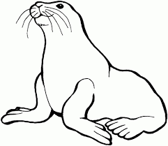Image result for black and white clip art of seal.