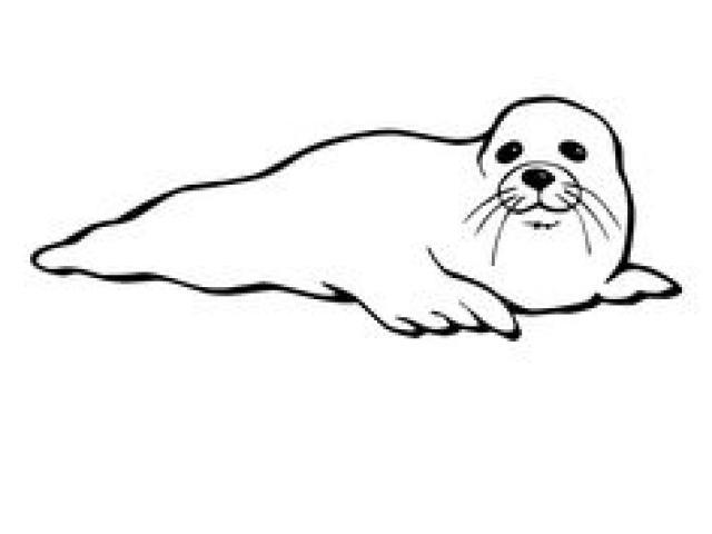 Seal clipart artic seal, Seal artic seal Transparent FREE.