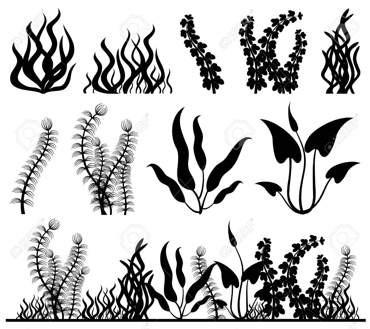 407 Seaweed free clipart.