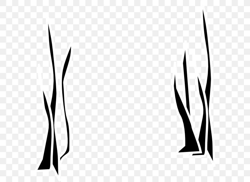 Seaweed Drawing Clip Art, PNG, 594x599px, Seaweed, Art.