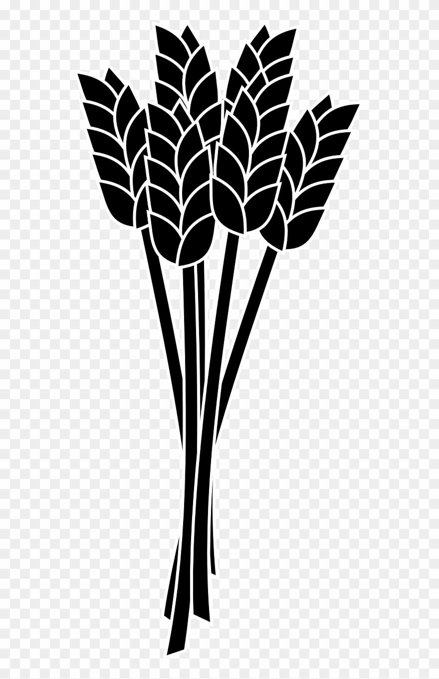 Wheat Spike Bunch Grain.