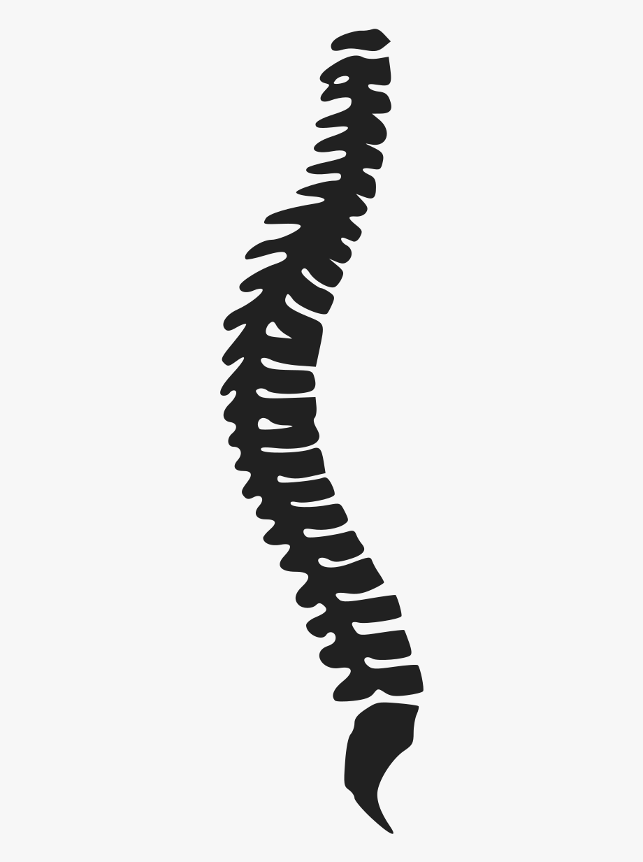 Spine Clipart Png.