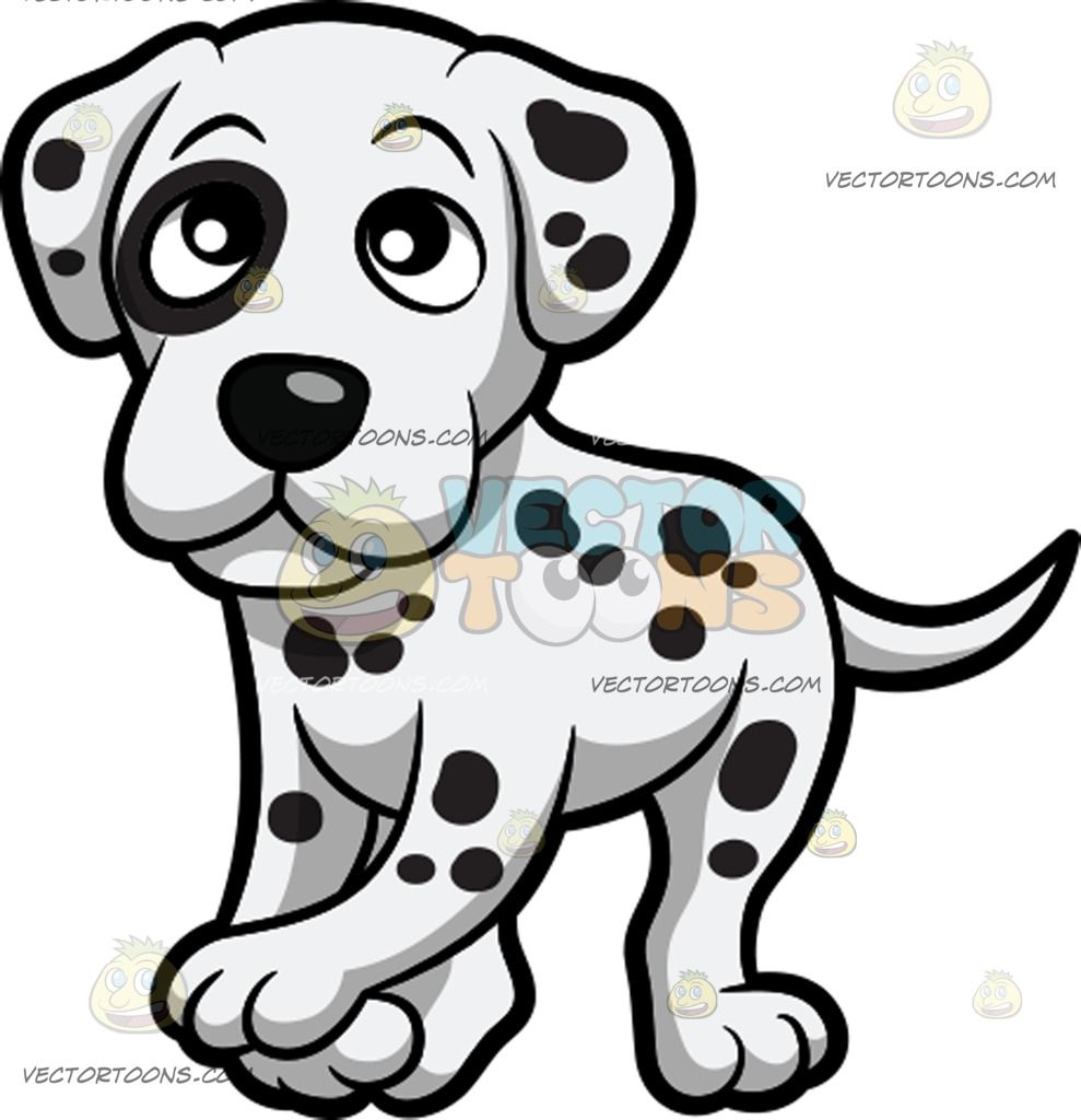 A Super Cute Dalmatian Puppy : A small dog with short white.