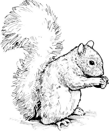 Free squirrel clipart image 7.