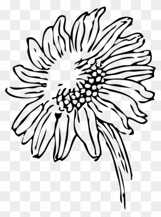 Free PNG Sunflower Clipart Black And White Clip Art Download.