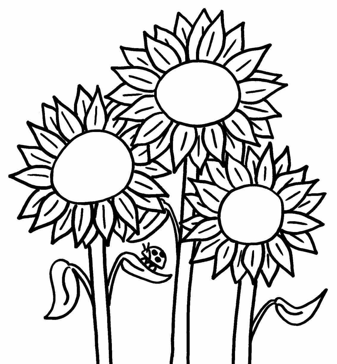 454 Sunflowers free clipart.