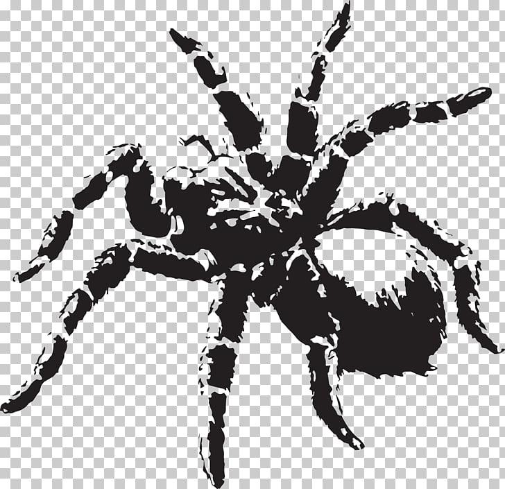 Spider Tarantula , spider PNG clipart.