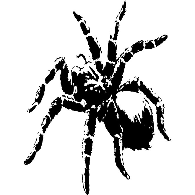 Tarantula free vector.