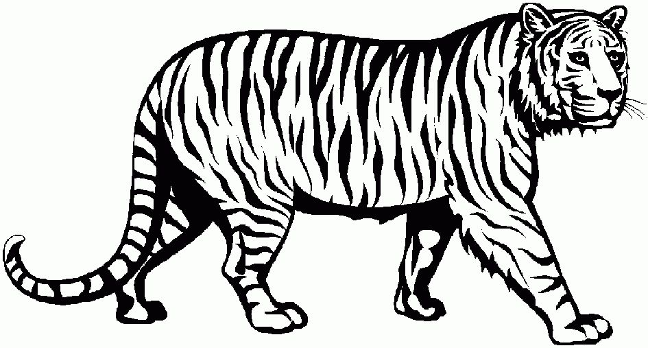 tiger clipart black and white elegant of cute tiger clipart.
