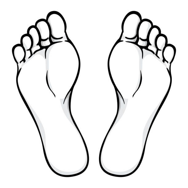 black and white clip art image of toes.