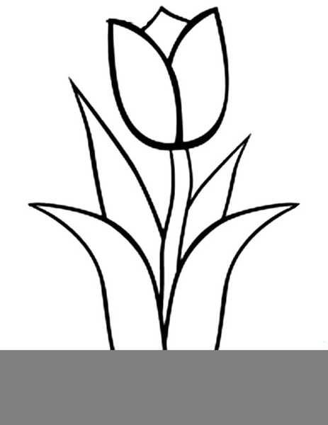 Tulip clipart black and white 2 » Clipart Station.