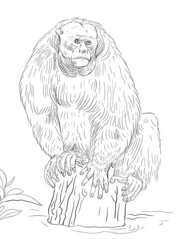 Bald Uakari coloring page.