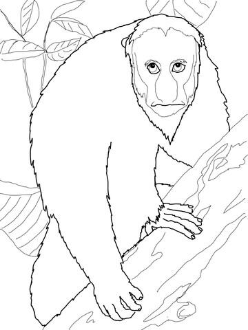 Uakari coloring page.