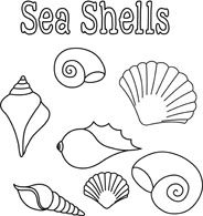 Search Results for shells.