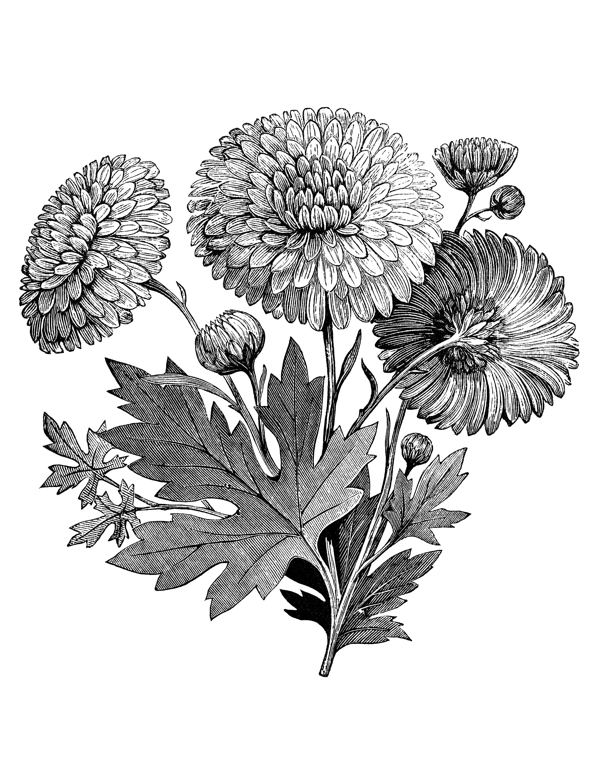 Vintage flower garden clip art black and white.