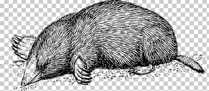 European Mole Moles Rat PNG, Clipart, Armadillo, Beaver.
