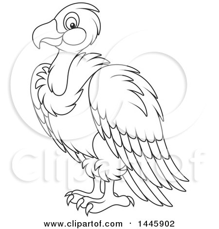 198 Vulture free clipart.