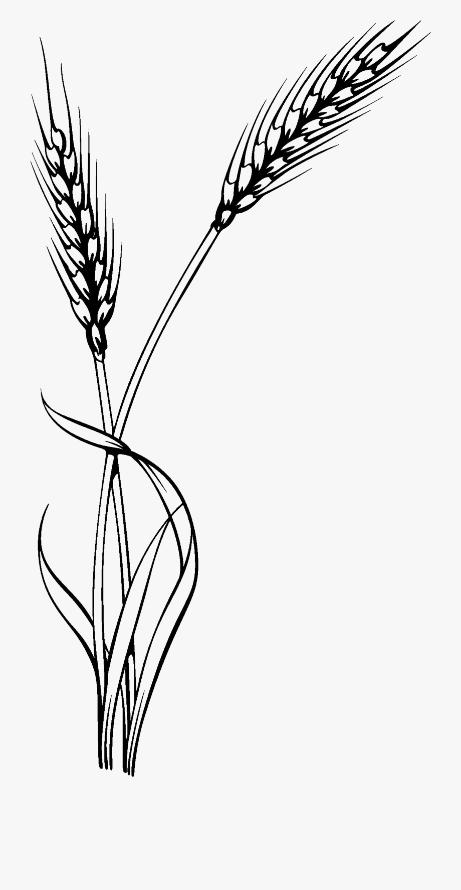 Wheat Clipart Millet Plant.