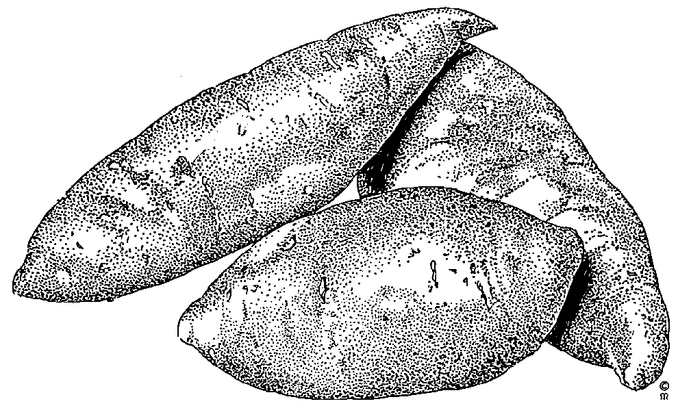 Free Yam Cliparts, Download Free Clip Art, Free Clip Art on.