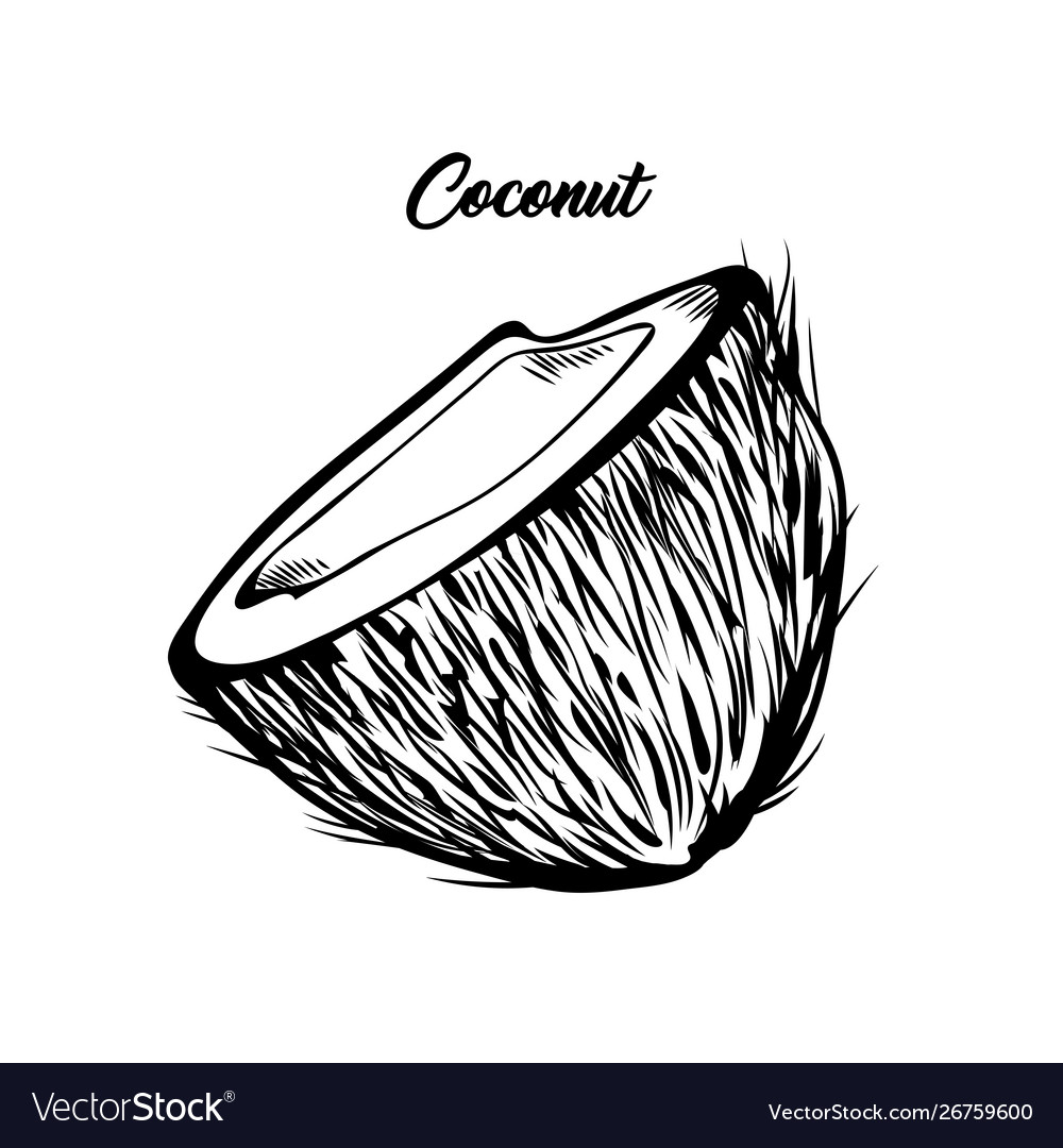 Open coconut hand drawn vector image.