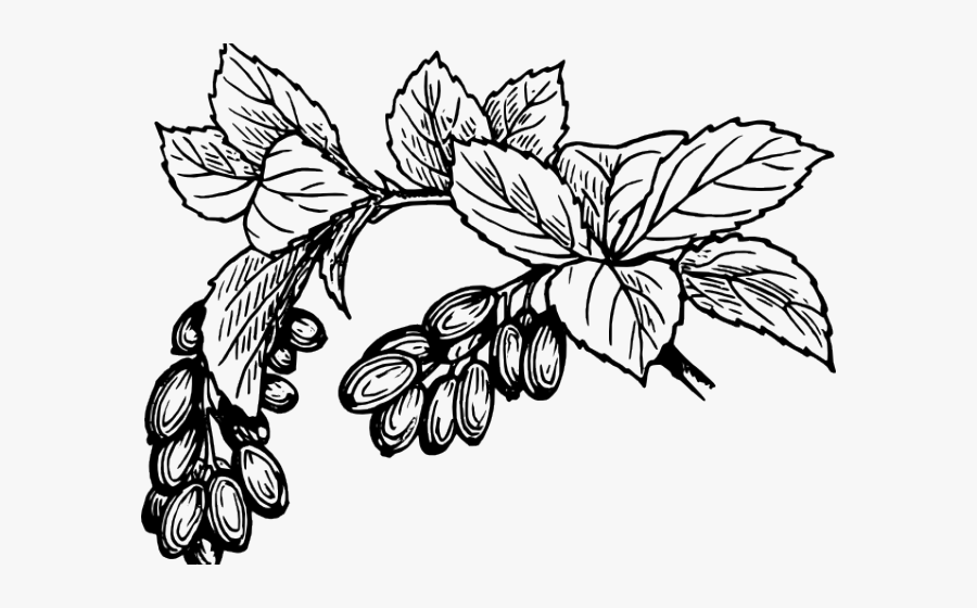 Cranberry Clipart Black And White.