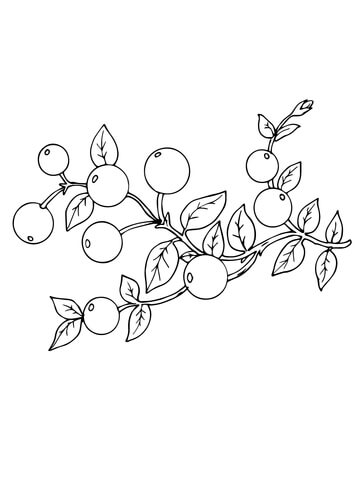 Cranberry coloring pages.
